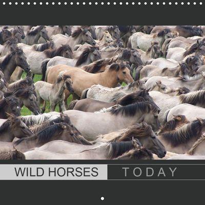 Wild horses today (Wall Calendar 2019 300 × 300 mm Square), Angelika keller
