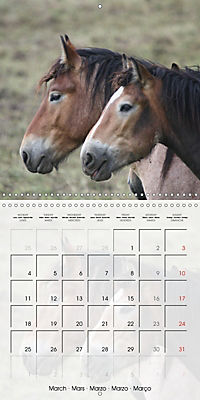 Wild horses today (Wall Calendar 2019 300 × 300 mm Square) - Produktdetailbild 3