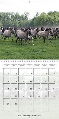 Wild horses today (Wall Calendar 2019 300 × 300 mm Square) - Produktdetailbild 4