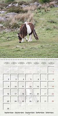 Wild horses today (Wall Calendar 2019 300 × 300 mm Square) - Produktdetailbild 9