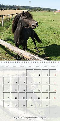 Wild horses today (Wall Calendar 2019 300 × 300 mm Square) - Produktdetailbild 8