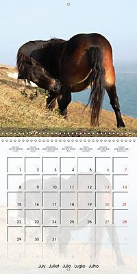 Wild horses today (Wall Calendar 2019 300 × 300 mm Square) - Produktdetailbild 7