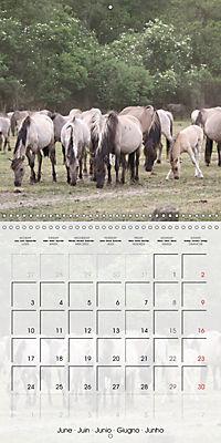 Wild horses today (Wall Calendar 2019 300 × 300 mm Square) - Produktdetailbild 6