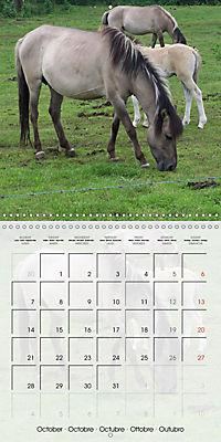 Wild horses today (Wall Calendar 2019 300 × 300 mm Square) - Produktdetailbild 10