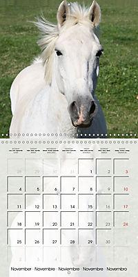 Wild horses today (Wall Calendar 2019 300 × 300 mm Square) - Produktdetailbild 11
