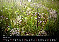 Wild Meadow Scenes (Wall Calendar 2019 DIN A4 Landscape) - Produktdetailbild 1