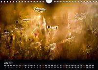 Wild Meadow Scenes (Wall Calendar 2019 DIN A4 Landscape) - Produktdetailbild 7