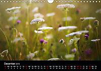 Wild Meadow Scenes (Wall Calendar 2019 DIN A4 Landscape) - Produktdetailbild 12