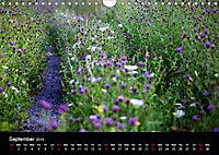 Wild Meadow Scenes (Wall Calendar 2019 DIN A4 Landscape) - Produktdetailbild 9