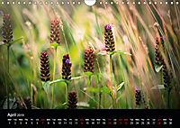 Wild Meadow Scenes (Wall Calendar 2019 DIN A4 Landscape) - Produktdetailbild 4