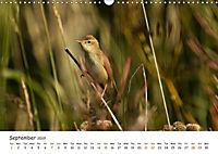 Wild North Karelia (Wall Calendar 2019 DIN A3 Landscape) - Produktdetailbild 9