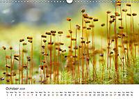 Wild North Karelia (Wall Calendar 2019 DIN A3 Landscape) - Produktdetailbild 10
