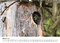 Wild North Karelia (Wall Calendar 2019 DIN A3 Landscape) - Produktdetailbild 3