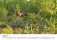Wild North Karelia (Wall Calendar 2019 DIN A3 Landscape) - Produktdetailbild 6