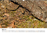 Wild North Karelia (Wall Calendar 2019 DIN A3 Landscape) - Produktdetailbild 5