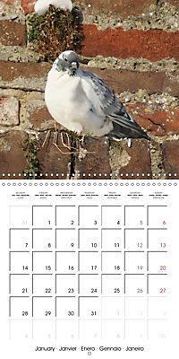 Wild Pigeons (Wall Calendar 2019 300 × 300 mm Square) - Produktdetailbild 1