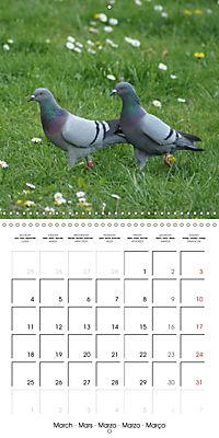 Wild Pigeons (Wall Calendar 2019 300 × 300 mm Square) - Produktdetailbild 3