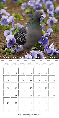 Wild Pigeons (Wall Calendar 2019 300 × 300 mm Square) - Produktdetailbild 4