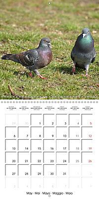Wild Pigeons (Wall Calendar 2019 300 × 300 mm Square) - Produktdetailbild 5