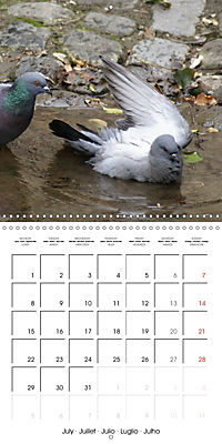 Wild Pigeons (Wall Calendar 2019 300 × 300 mm Square) - Produktdetailbild 7