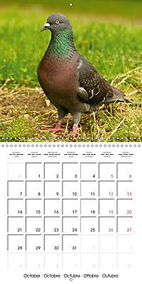Wild Pigeons (Wall Calendar 2019 300 × 300 mm Square) - Produktdetailbild 10