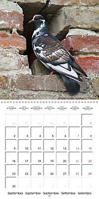 Wild Pigeons (Wall Calendar 2019 300 × 300 mm Square) - Produktdetailbild 9
