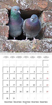 Wild Pigeons (Wall Calendar 2019 300 × 300 mm Square) - Produktdetailbild 12