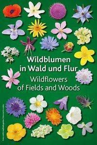 Wildblumen in Wald und Flur