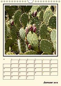 Wilde Kakteen Amerikas (Wandkalender 2019 DIN A4 hoch) - Produktdetailbild 1