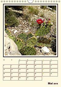 Wilde Kakteen Amerikas (Wandkalender 2019 DIN A4 hoch) - Produktdetailbild 5