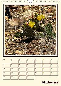 Wilde Kakteen Amerikas (Wandkalender 2019 DIN A4 hoch) - Produktdetailbild 10