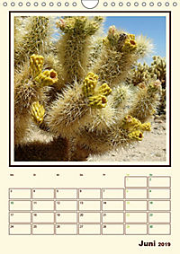 Wilde Kakteen Amerikas (Wandkalender 2019 DIN A4 hoch) - Produktdetailbild 6