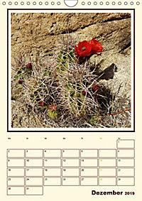 Wilde Kakteen Amerikas (Wandkalender 2019 DIN A4 hoch) - Produktdetailbild 12