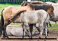 Wilde Pferde von Michael Jaster (Wandkalender 2019 DIN A4 quer) - Produktdetailbild 1