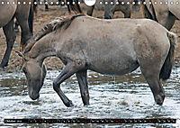 Wilde Pferde von Michael Jaster (Wandkalender 2019 DIN A4 quer) - Produktdetailbild 2