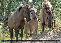 Wilde Pferde von Michael Jaster (Wandkalender 2019 DIN A4 quer) - Produktdetailbild 4