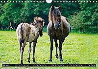 Wilde Pferde von Michael Jaster (Wandkalender 2019 DIN A4 quer) - Produktdetailbild 6