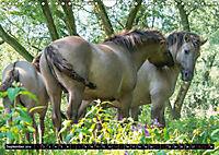 Wilde Pferde von Michael Jaster (Wandkalender 2019 DIN A4 quer) - Produktdetailbild 9