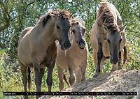 Wilde Pferde von Michael Jaster (Wandkalender 2019 DIN A2 quer) - Produktdetailbild 1