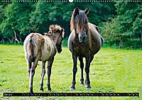 Wilde Pferde von Michael Jaster (Wandkalender 2019 DIN A2 quer) - Produktdetailbild 7