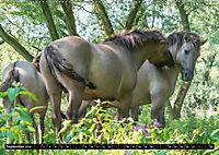 Wilde Pferde von Michael Jaster (Wandkalender 2019 DIN A2 quer) - Produktdetailbild 9