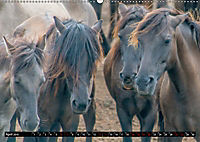 Wilde Pferde von Michael Jaster (Wandkalender 2019 DIN A2 quer) - Produktdetailbild 4