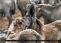 Wilde Pferde von Michael Jaster (Wandkalender 2019 DIN A2 quer) - Produktdetailbild 8