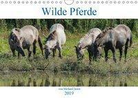 Wilde Pferde von Michael Jaster (Wandkalender 2019 DIN A4 quer), N N