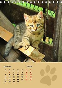 Wilde Tätzchen (Tischkalender 2019 DIN A5 hoch) - Produktdetailbild 1