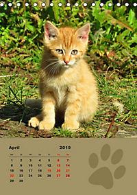 Wilde Tätzchen (Tischkalender 2019 DIN A5 hoch) - Produktdetailbild 4