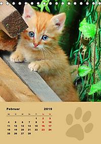 Wilde Tätzchen (Tischkalender 2019 DIN A5 hoch) - Produktdetailbild 2