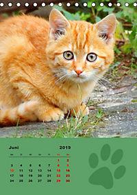 Wilde Tätzchen (Tischkalender 2019 DIN A5 hoch) - Produktdetailbild 6