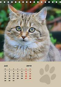 Wilde Tätzchen (Tischkalender 2019 DIN A5 hoch) - Produktdetailbild 7