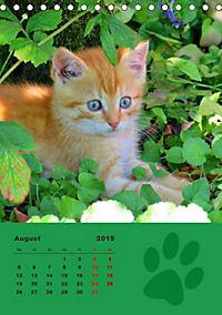 Wilde Tätzchen (Tischkalender 2019 DIN A5 hoch) - Produktdetailbild 8